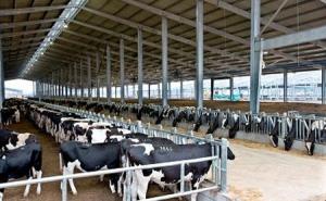 Socodevi Canada sẽ giúp Lâm Đồng xây dựng mô hình HTX chăn nuôi bò sữa