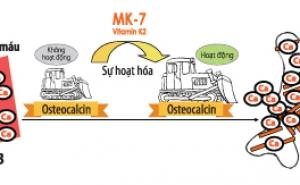 VAI TRÒ CỦA MK7 VỚI SỨC KHỎE CON NGƯỜI