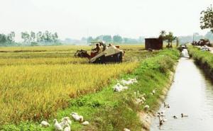 """Tín dụng cho cơ giới hóa nông nghiệp Hà Nội: """"Cánh cửa"""" đang nới rộng"""